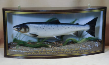 Salmon by Peter Scott