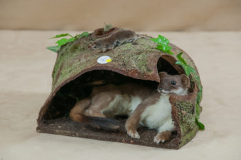 Stoat by Heather Beadle
