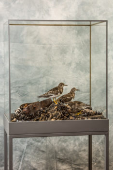 Turnstones by Jack Fishwick